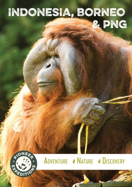 Indonesia, Borneo & PNG Brochure